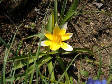 Wenn der Frühling naht, muss der Garten auf das Gartenjahr vorbereitet werden.