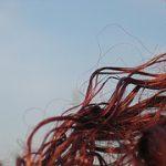 Schöne Haare - hier gibt es Haarpflegetipps