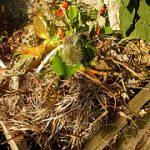 Einen Kompost anlegen - Anleitung