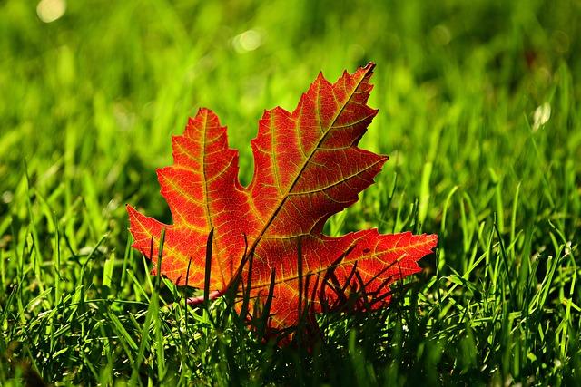 Den Rasen im Herbst pflegen - Anleitung, Tipps, Tricks
