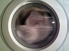 Auch eine Waschmaschine muss von Zeit zu Zeot gereinigt werden - wir zeigen wie man alles richtig macht