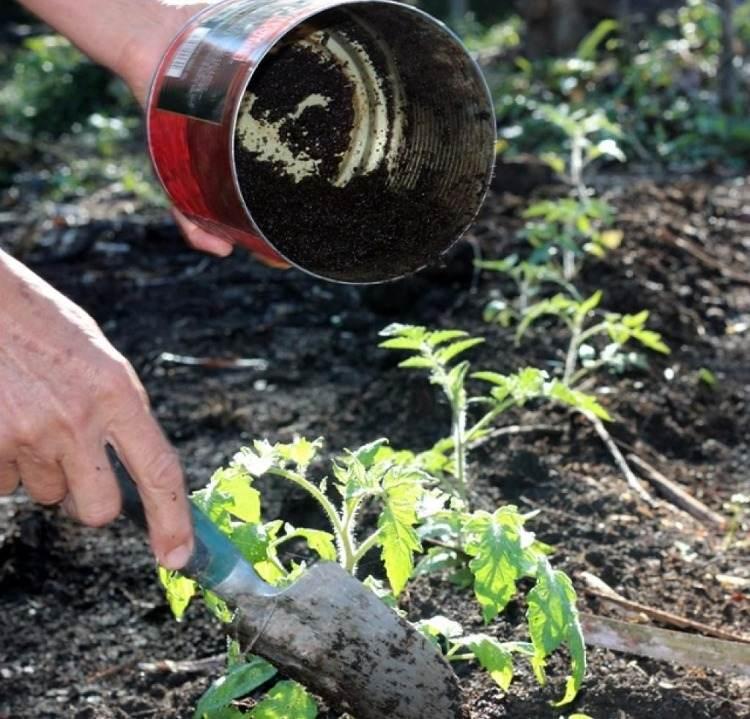 ideen für natürliche produkte verwendung im garten tomaten düngen mit kaffeesatz